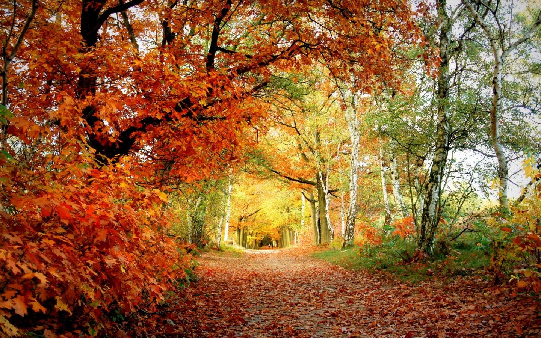 Autumn Beauty 1440 x 900 Download Close 1440x900