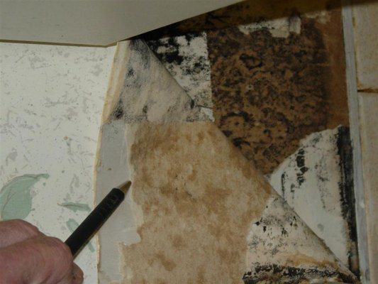 Black mold growing behind wallpaper at house Yelp 533x400