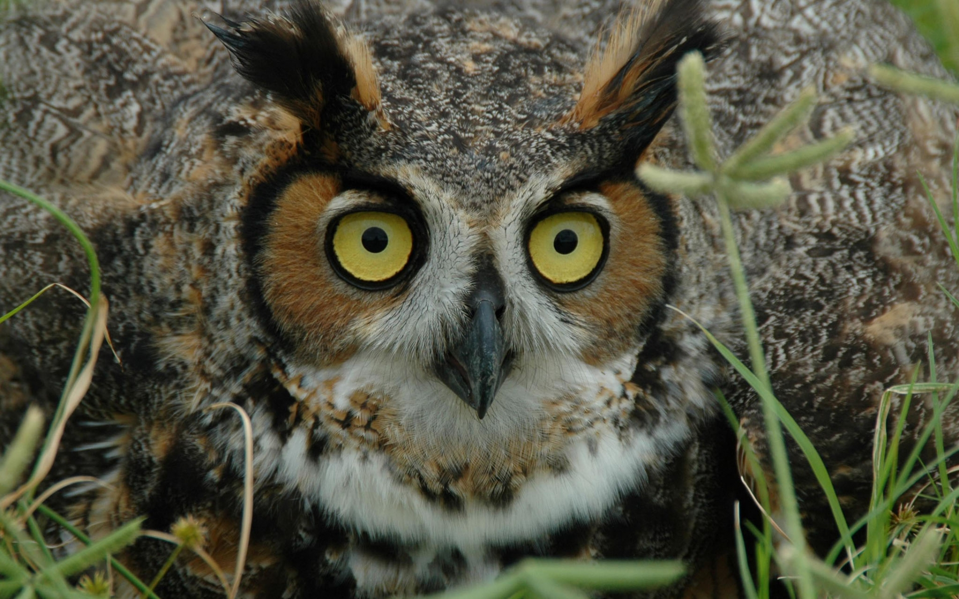 Winter Owl Desktop Wallpaper
