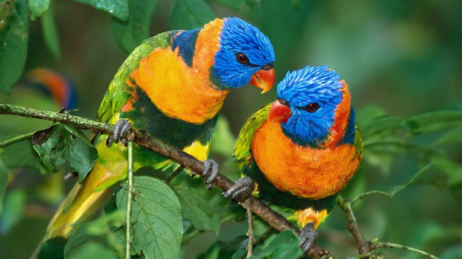 All Wallpapers Parrot Hd Wallpapers 2 1600x900