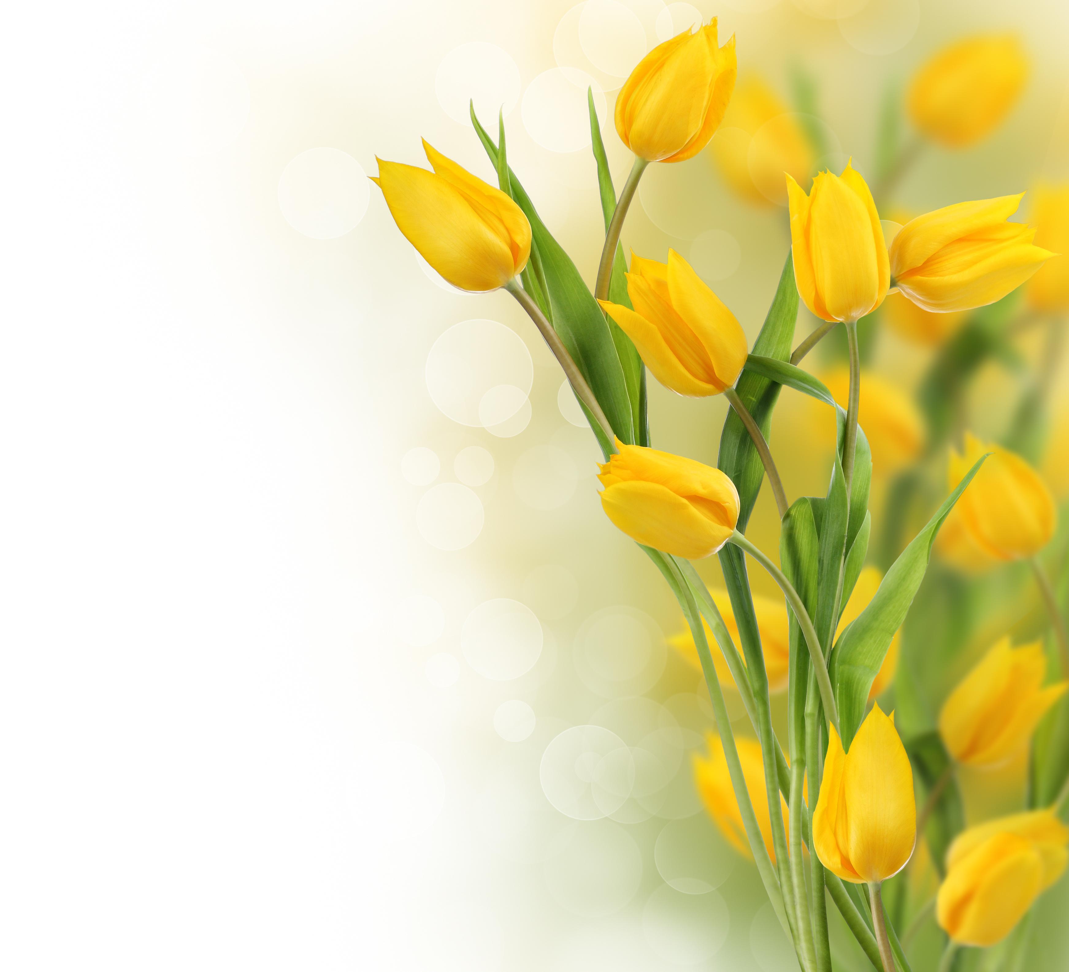 Yellow Tulips Wallpaper Desktop