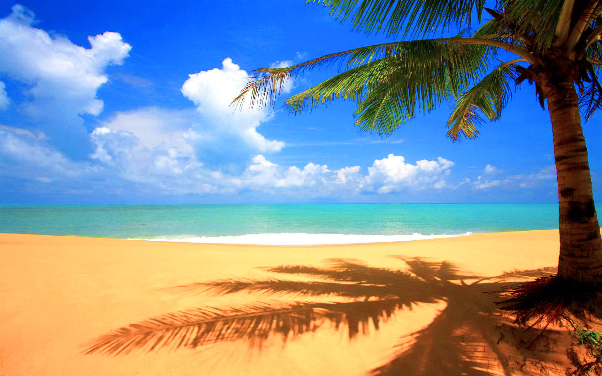 Beach with Palm Tree   Cool Twitter Backgrounds 1920x1200