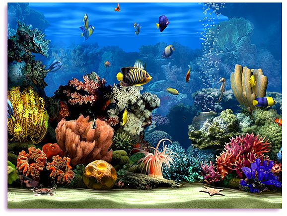 3D Aquarium Screensaver Operating System OS Windows 7 Vista 578x435