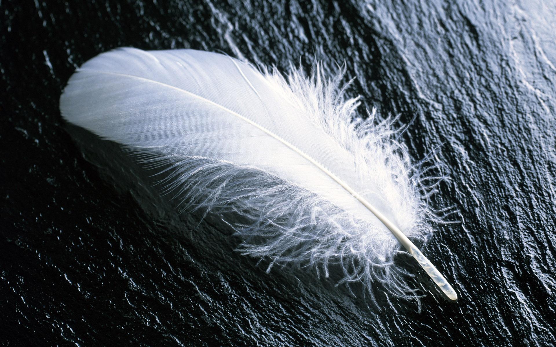 White feathers wallpaper Wallpaper Wide HD 1920x1200