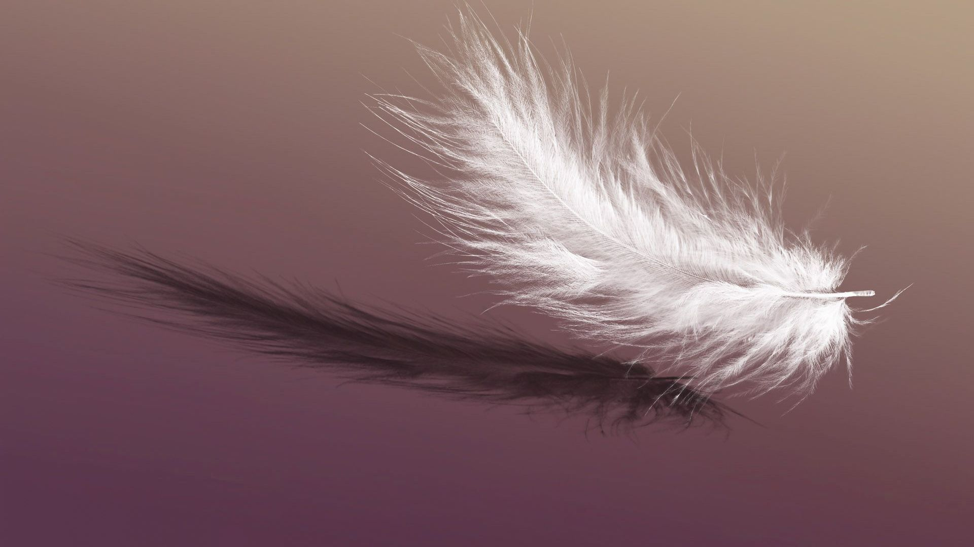 Falling feather wallpaper 32093 1920x1080