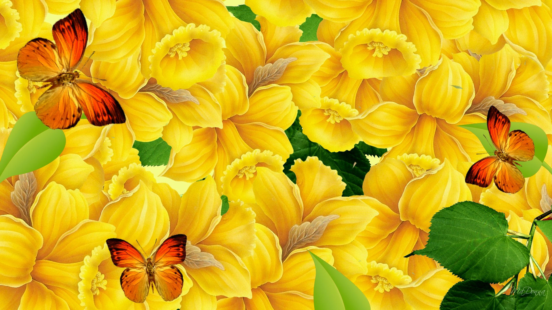 Awesome Colorful Butterflies HD backgrounds Unique HD Wallpapers 1920x1080
