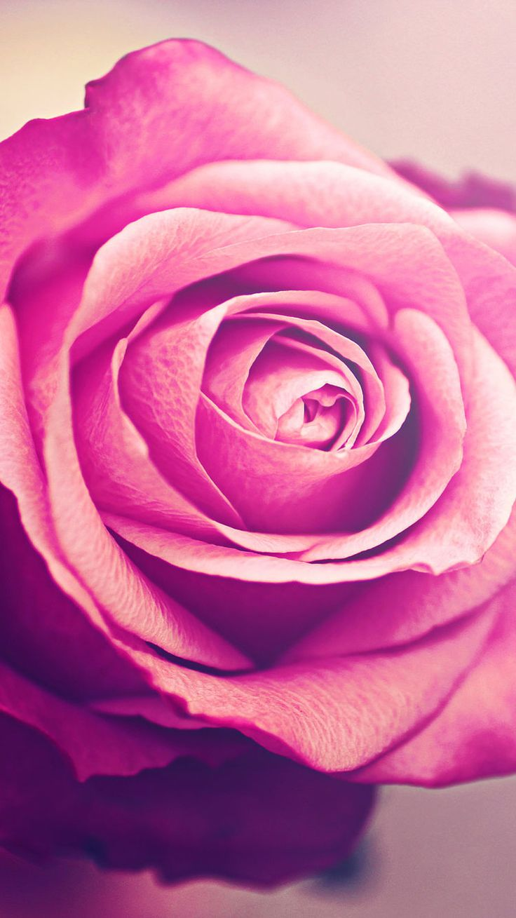 96 Gold Rose Wallpapers On Wallpapersafari