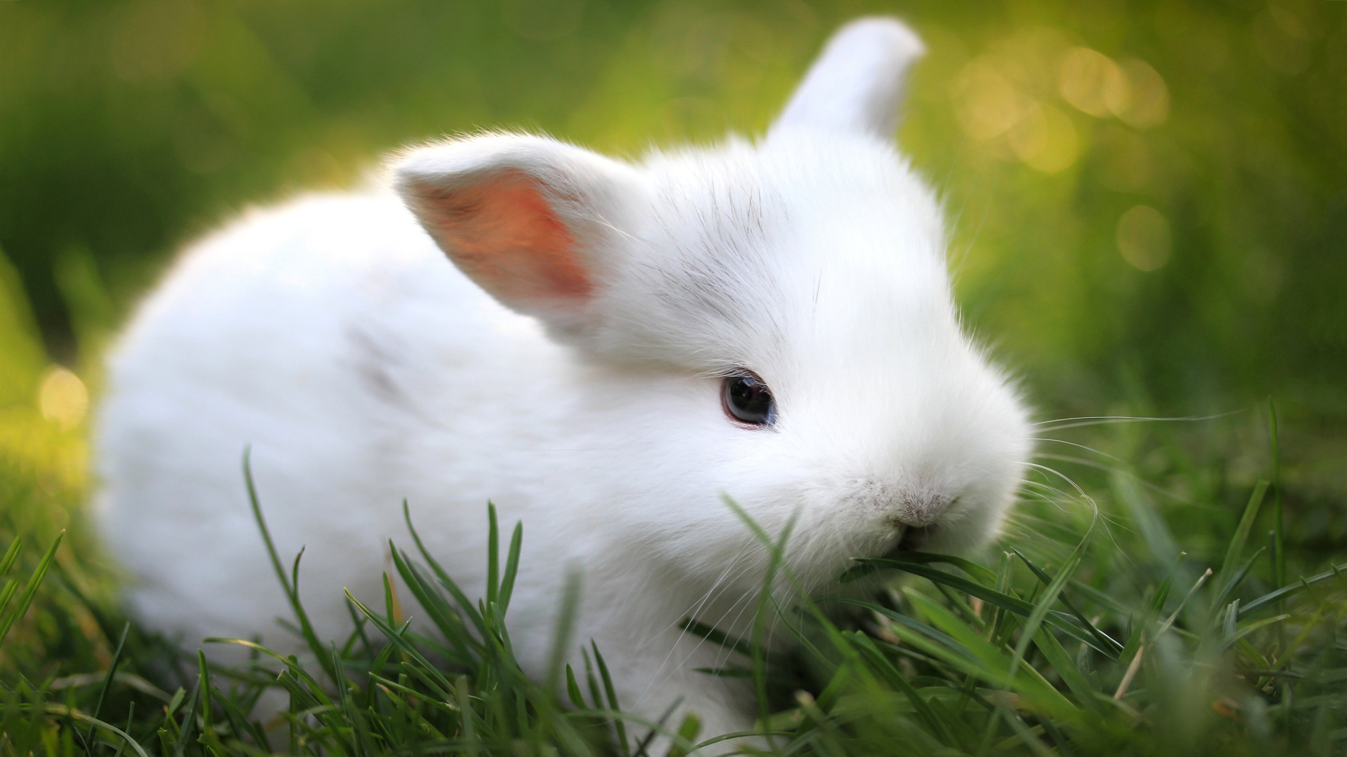 Gallery For gt Cute Baby Animal Wallpapers 1920x1080