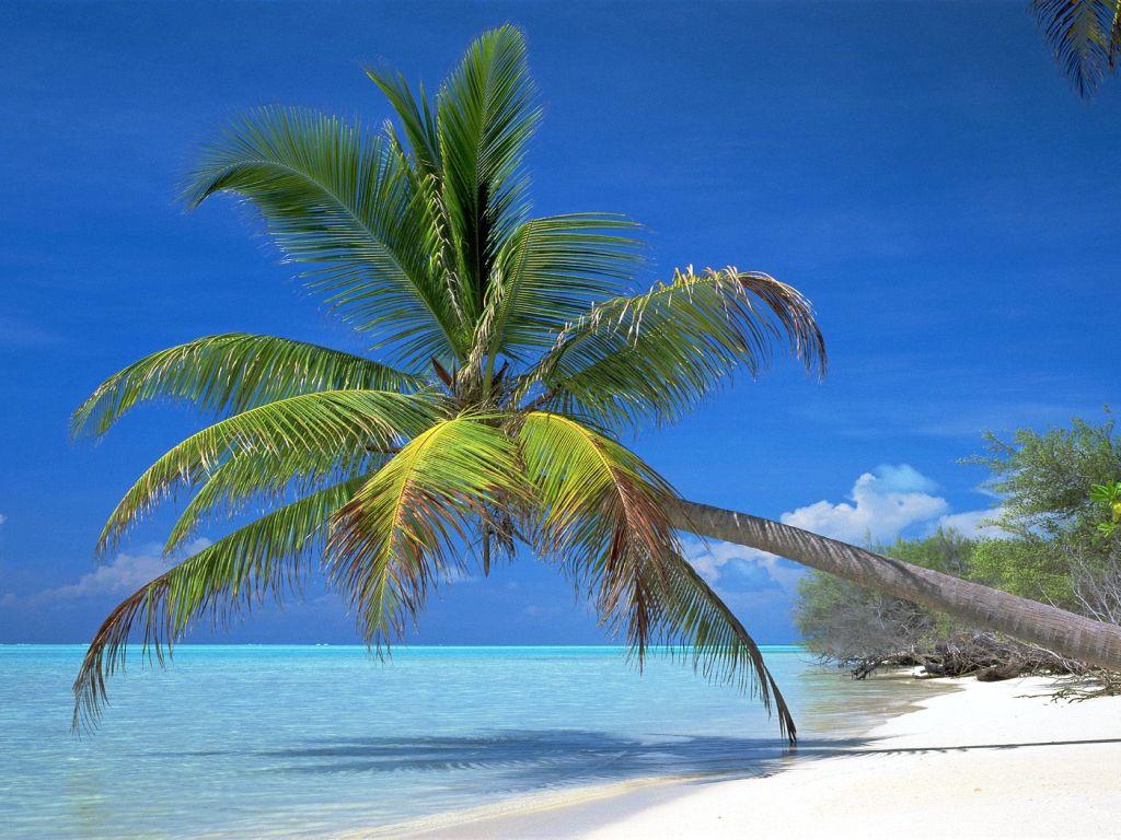 palm tree wallpapers beach sunset wallpaper   Quotekocom 1024x768