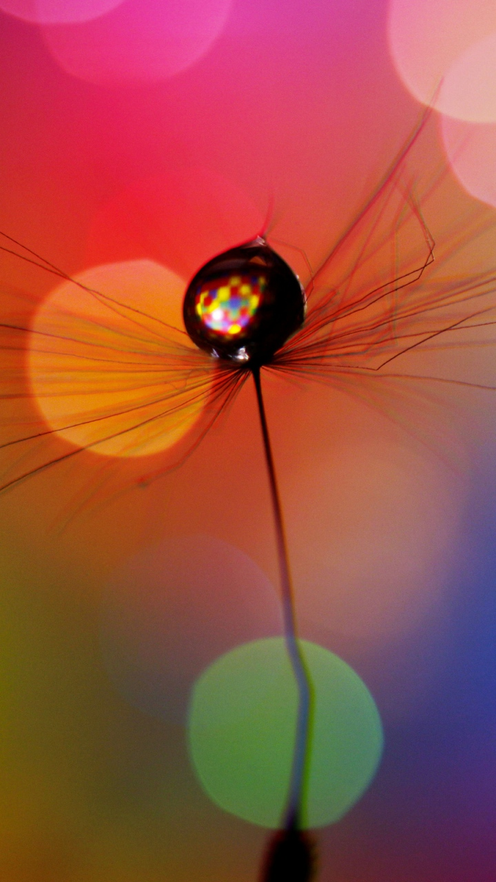 Wallpaper 720x1280 dandelion drop multicolored spots Samsung 720x1280