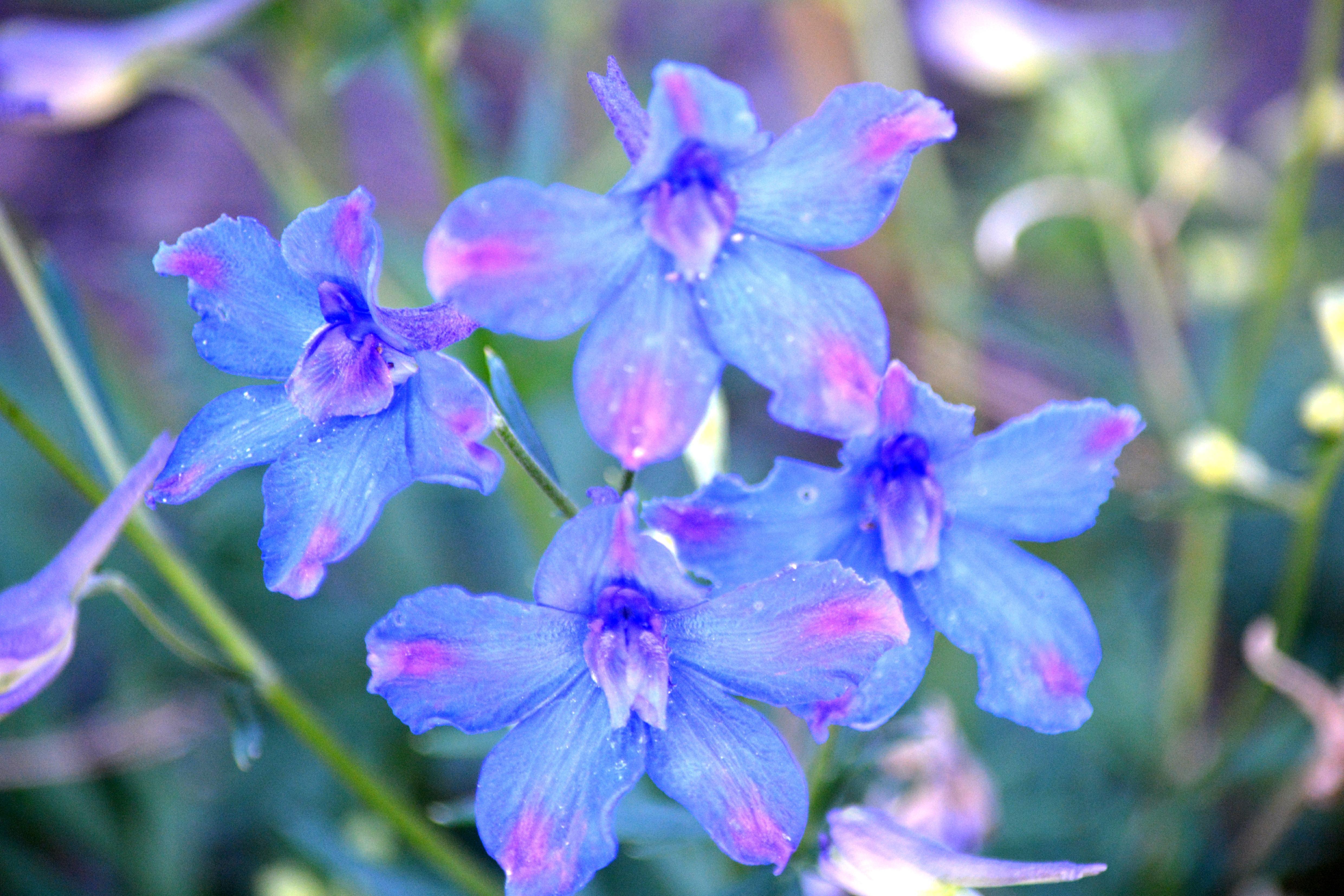 Wallpaper Pink and Blue Flowers - WallpaperSafari