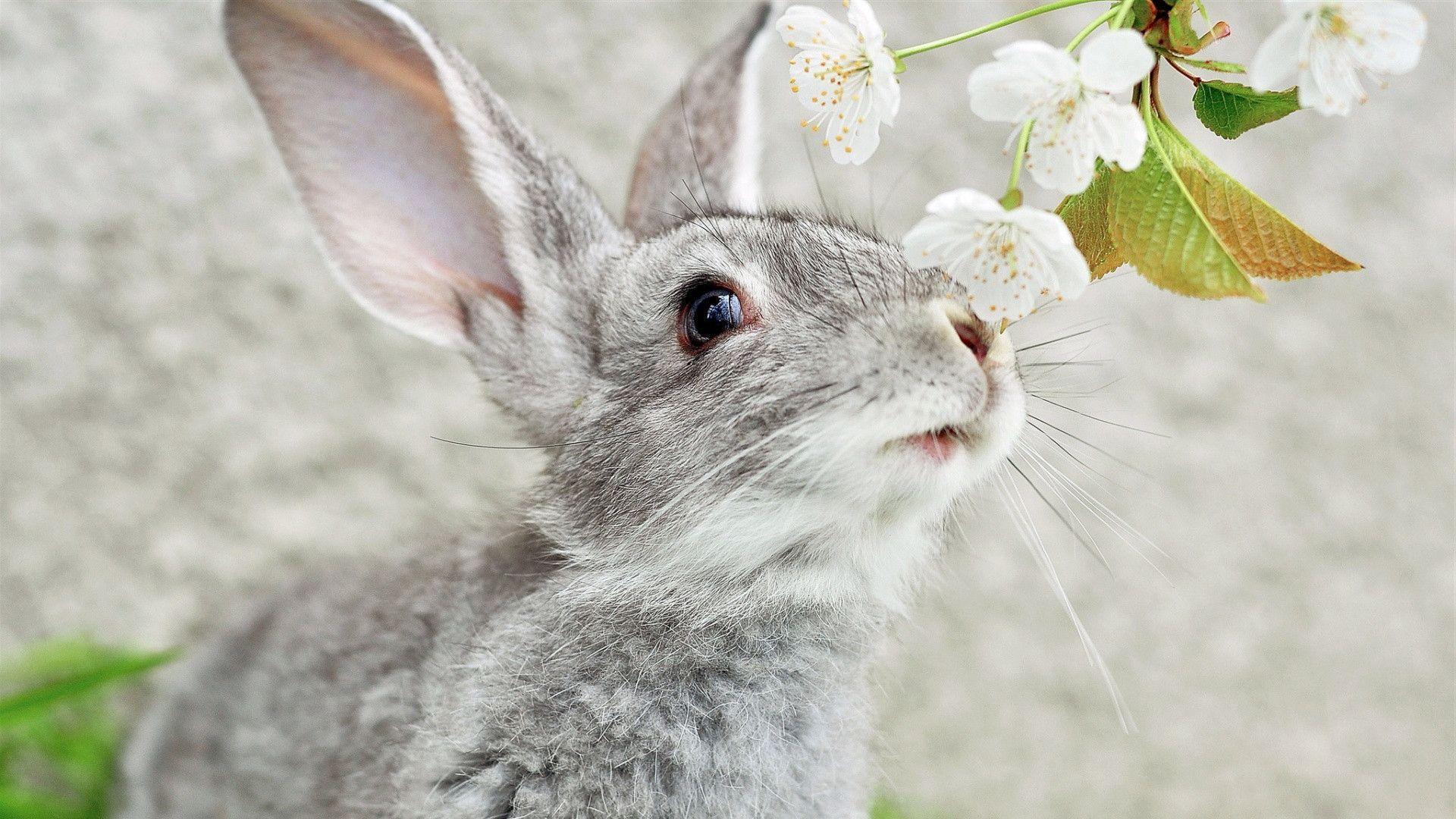 Rabbit Wallpapers 1920x1080