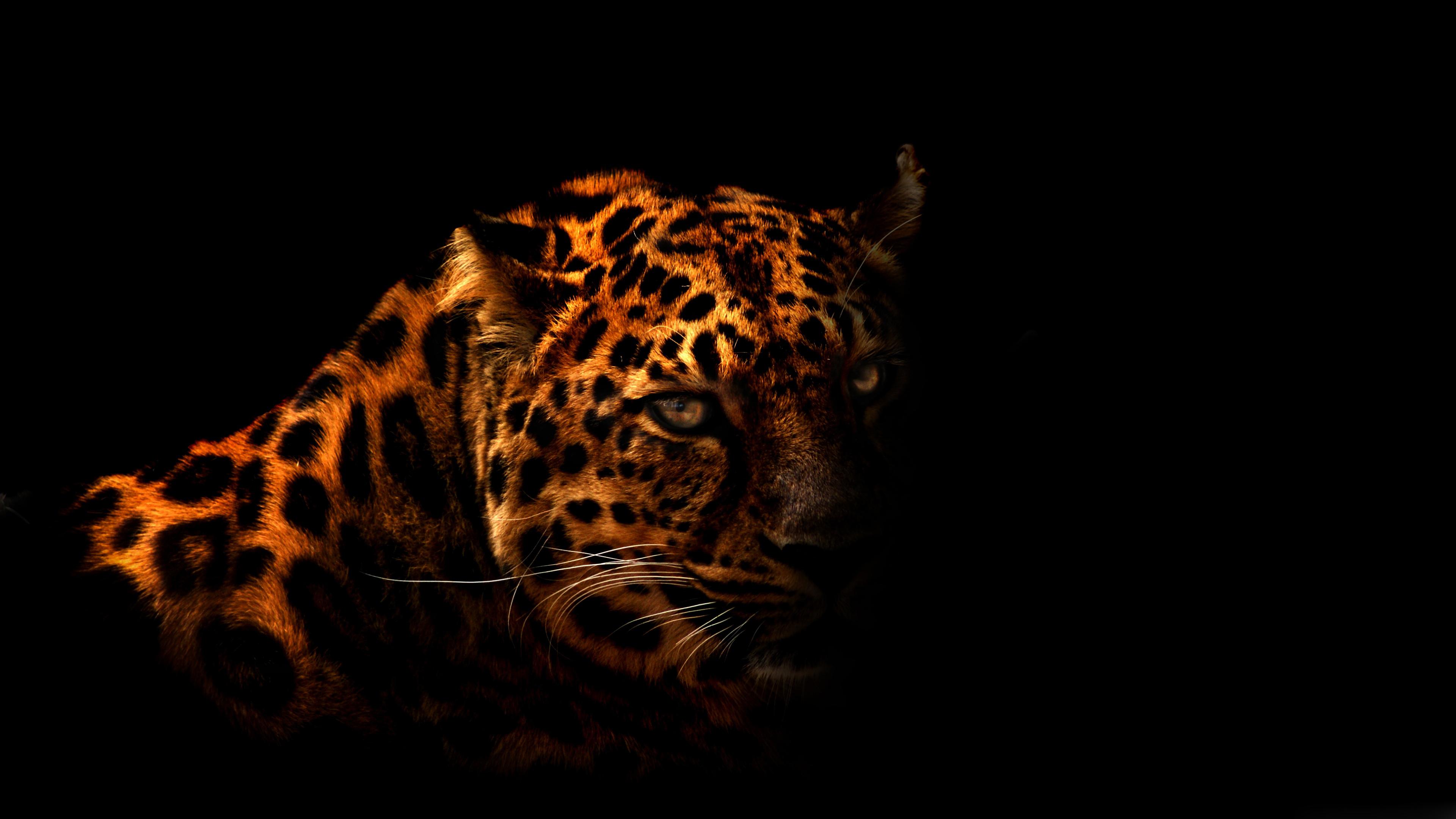 Leopard HD Wallpaper High Resolution 3840x2160