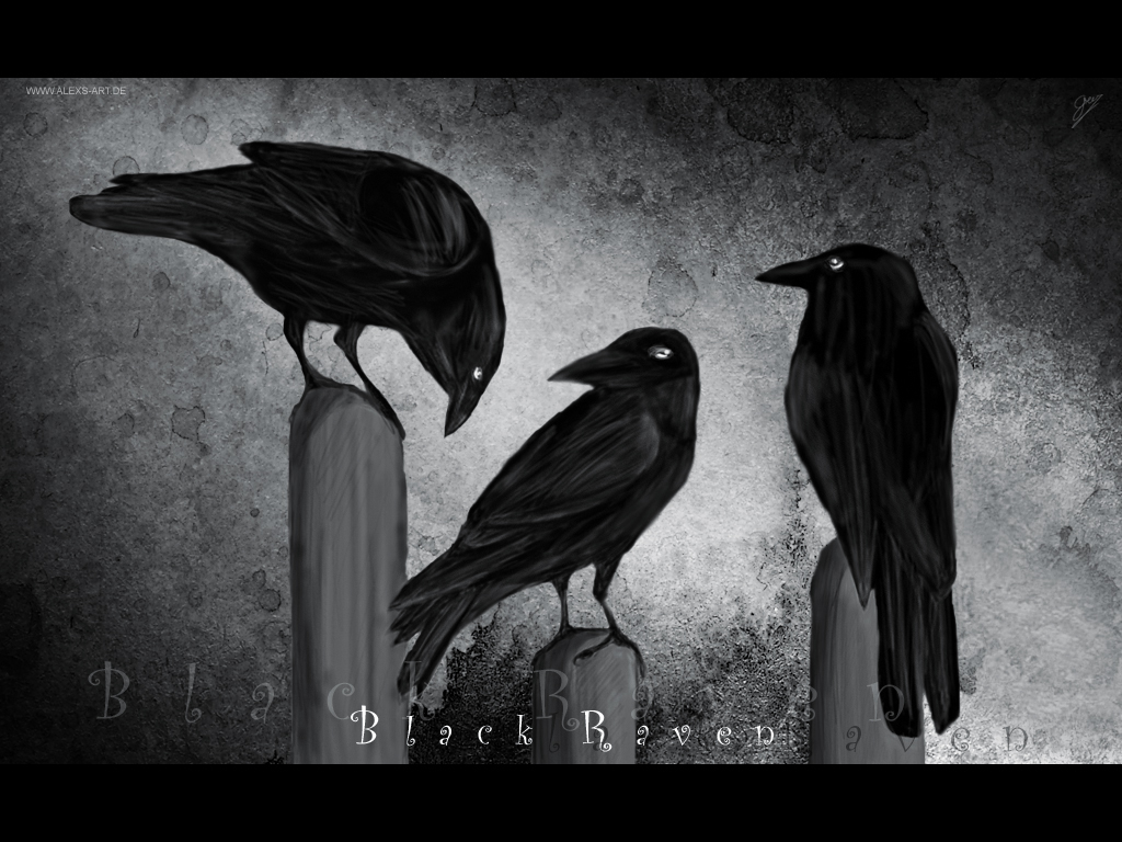 Corvids Unkindness and Murder   The Autodidact in the Attic 1024x768