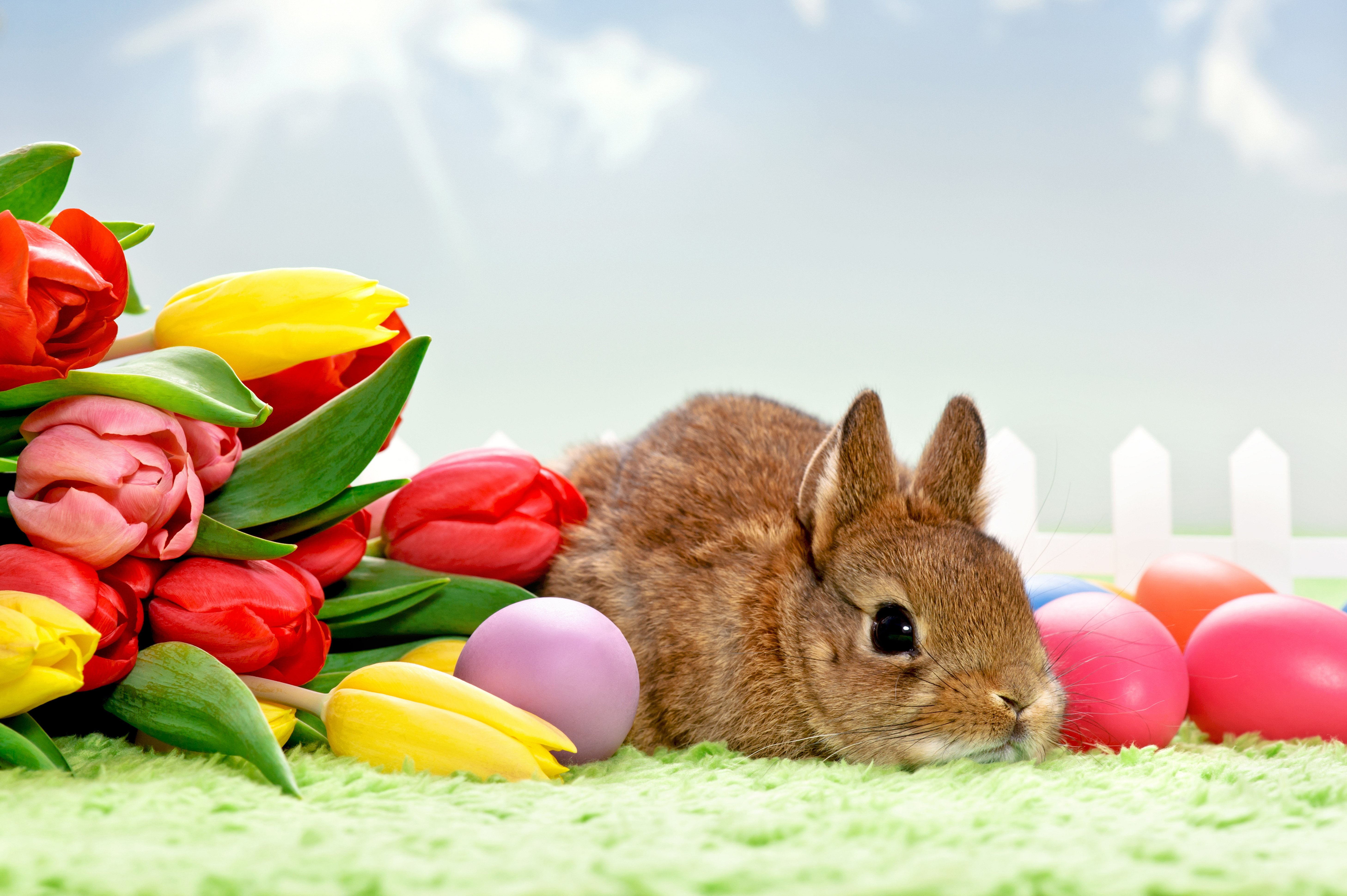 easter bunnies wallpaper wallpapersafari