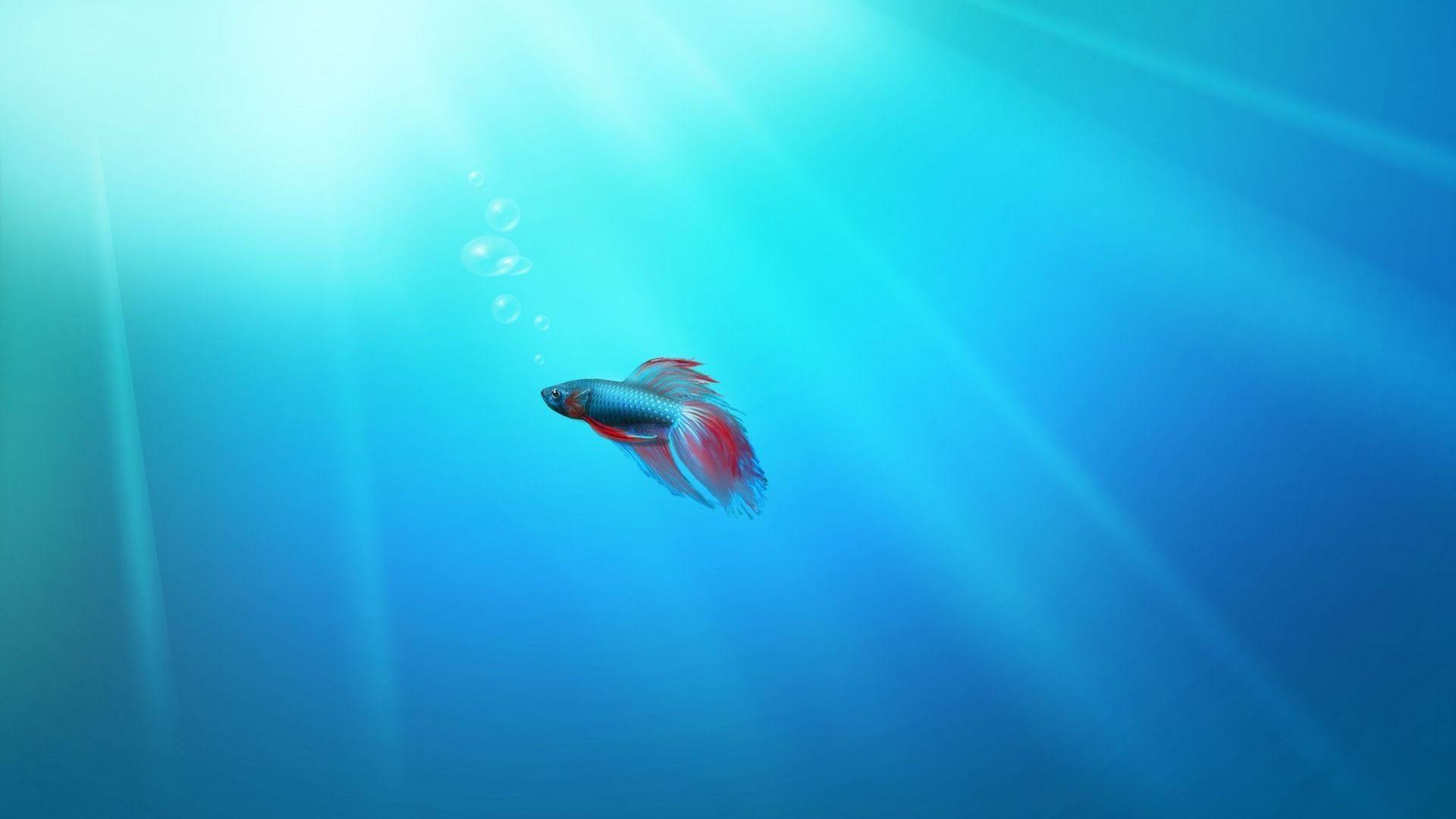 3d обои для рабочего стола аквариум с плавающими рыбками