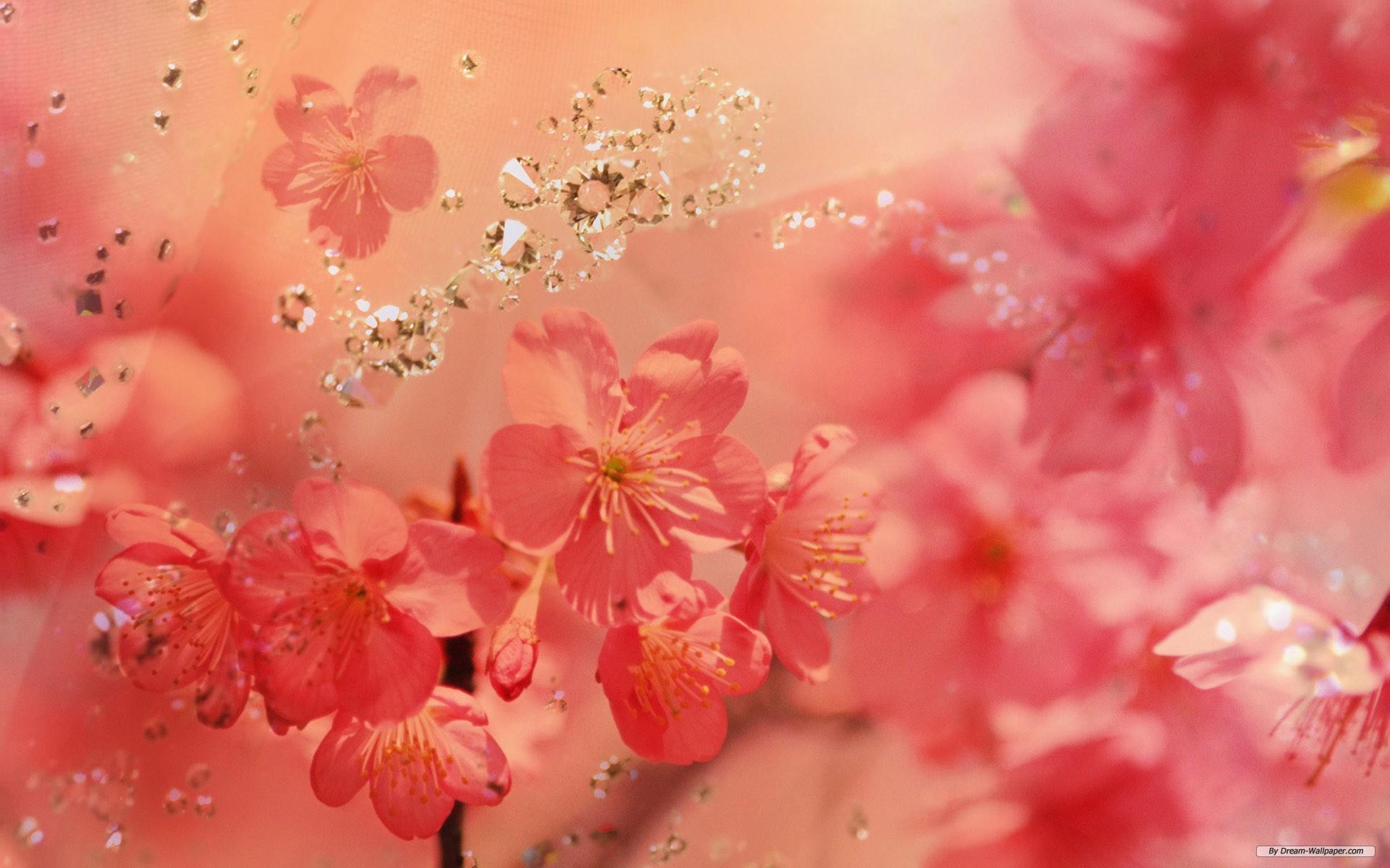 rose flowers wallpaper Flower Wallpapers 1920x1200