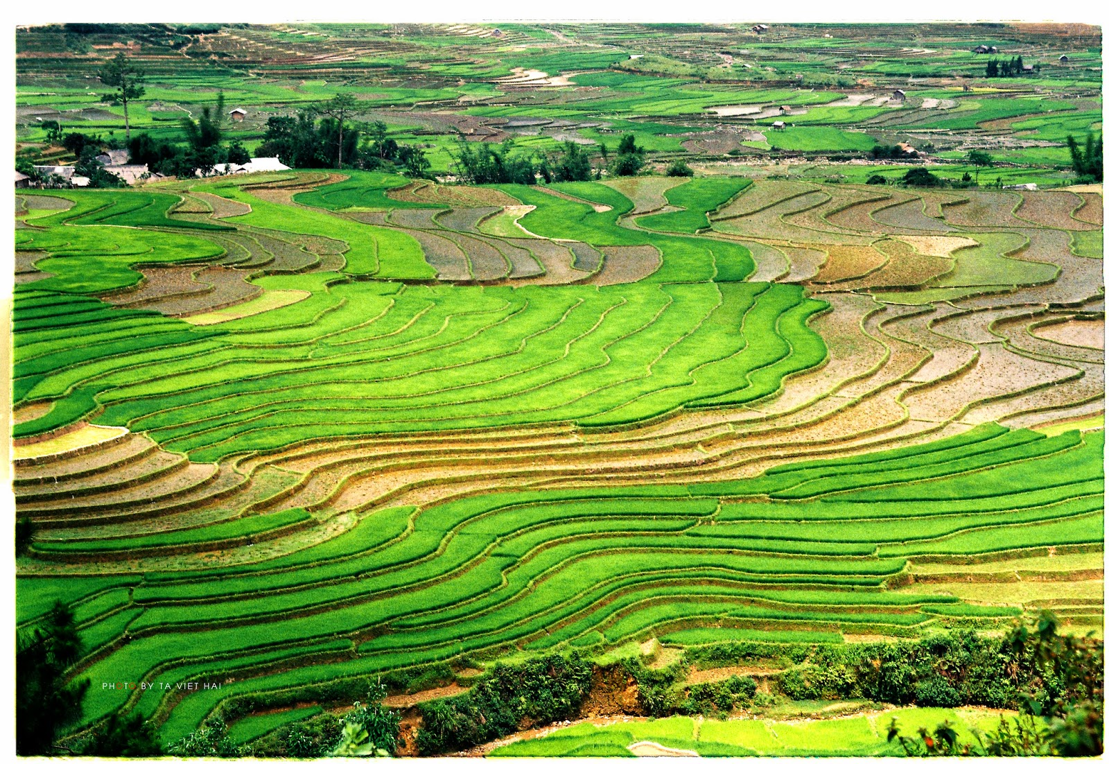 Beautiful Terraced Fields in Vietnam Most beautiful places in the 1600x1102