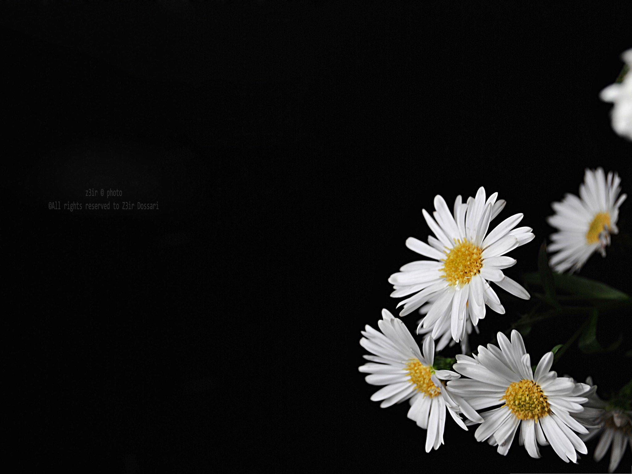 black background wallpaper with flowers wallpapersafari