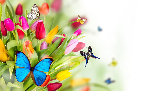 Spring Flowers And Butterflies Wallpapers The Art Mad Wallpapers 596x380