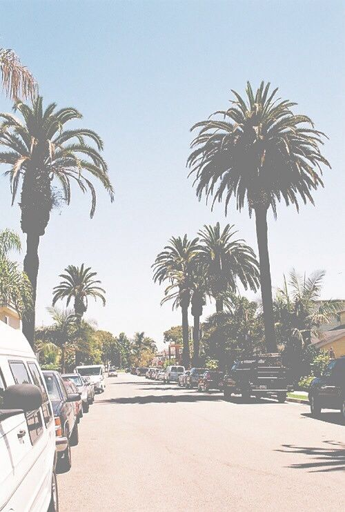 California Palm Trees Tumblr Wallpaper Palm Trees Iphone Wallpaper 500x742