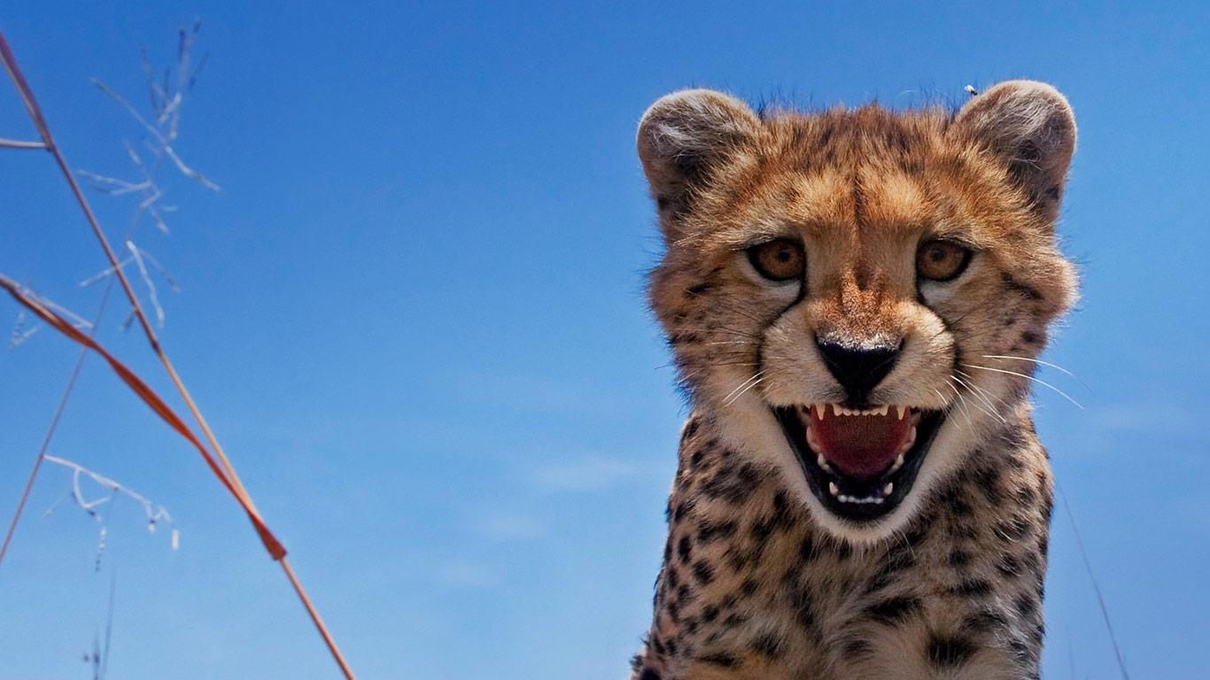 Free Download Image Bing Desktop Animals Pc Android Iphone And Ipad