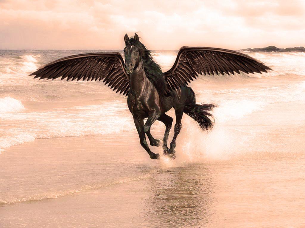 Wild Horses Wallpaper for my Desktop HD Wallpaper 1024x768