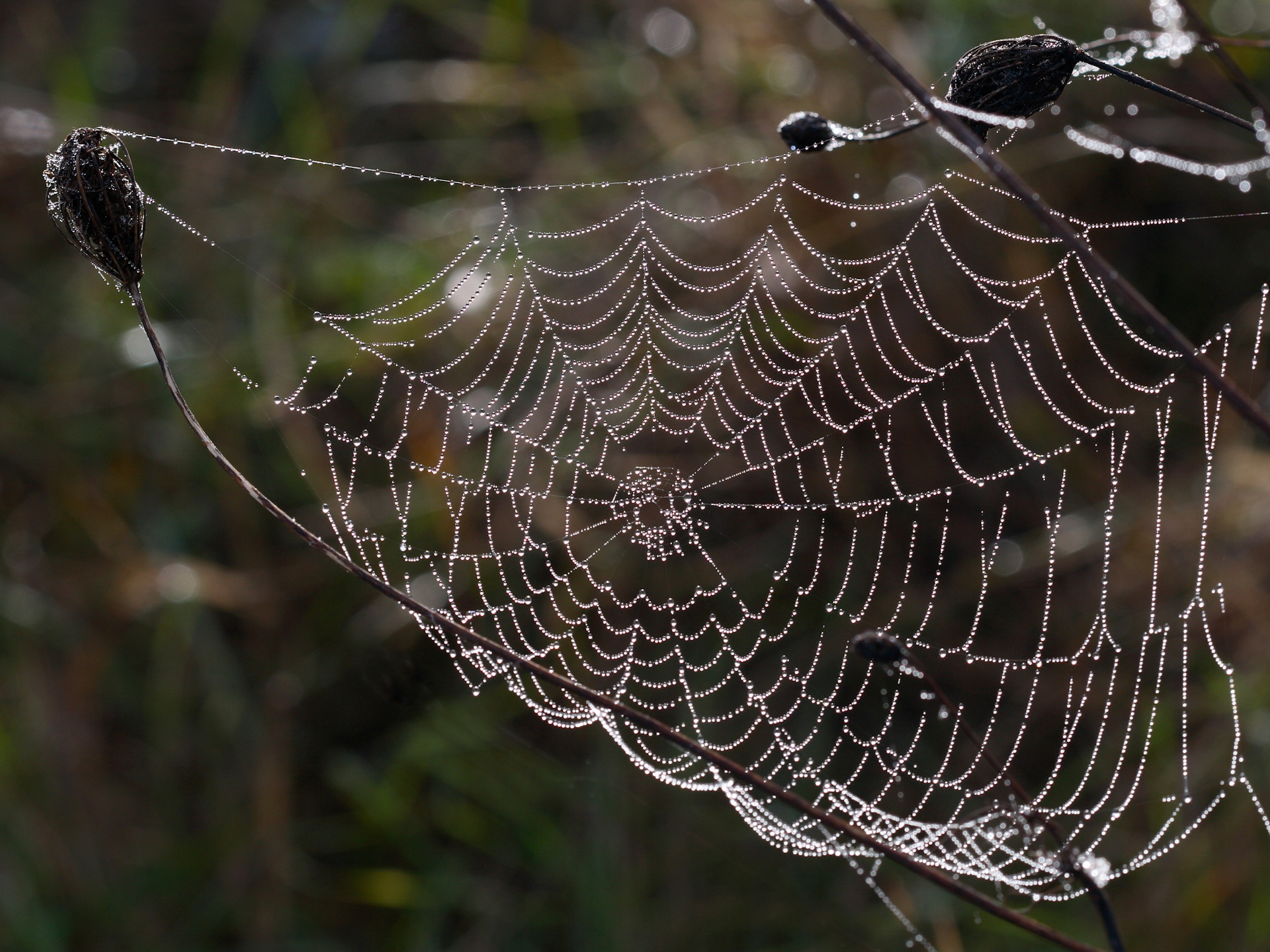 1920x1440 Wet spider web desktop PC and Mac wallpaper 1920x1440