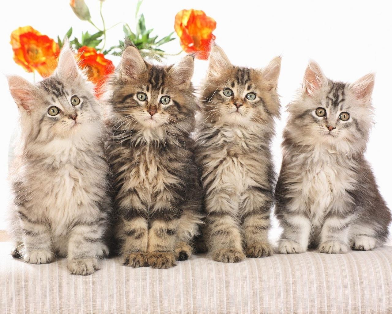 My Top Collection Cat desktop wallpaper 3 1280x1024