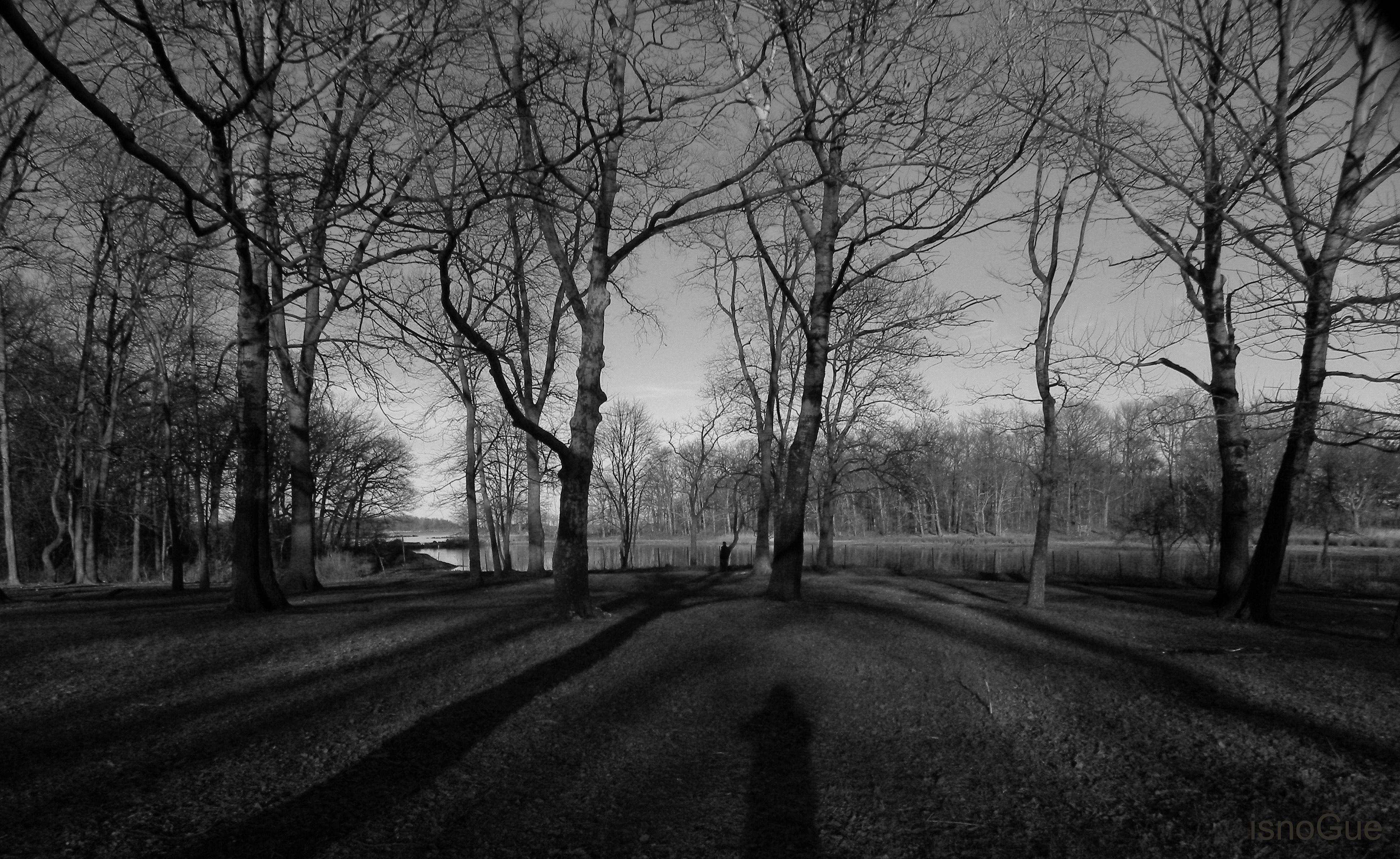 black and white forest wallpaper   ForWallpapercom 3896x2392