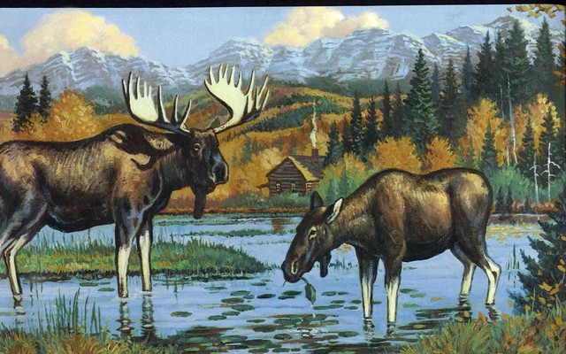 Black Moose Wallpaper Border Roll rustic wallpaper 640x400