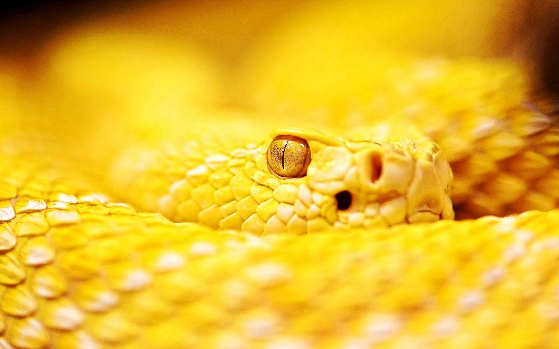 Download Albino Rattle Snake Wallpaper HD Wallpaper Animals 1920x1200