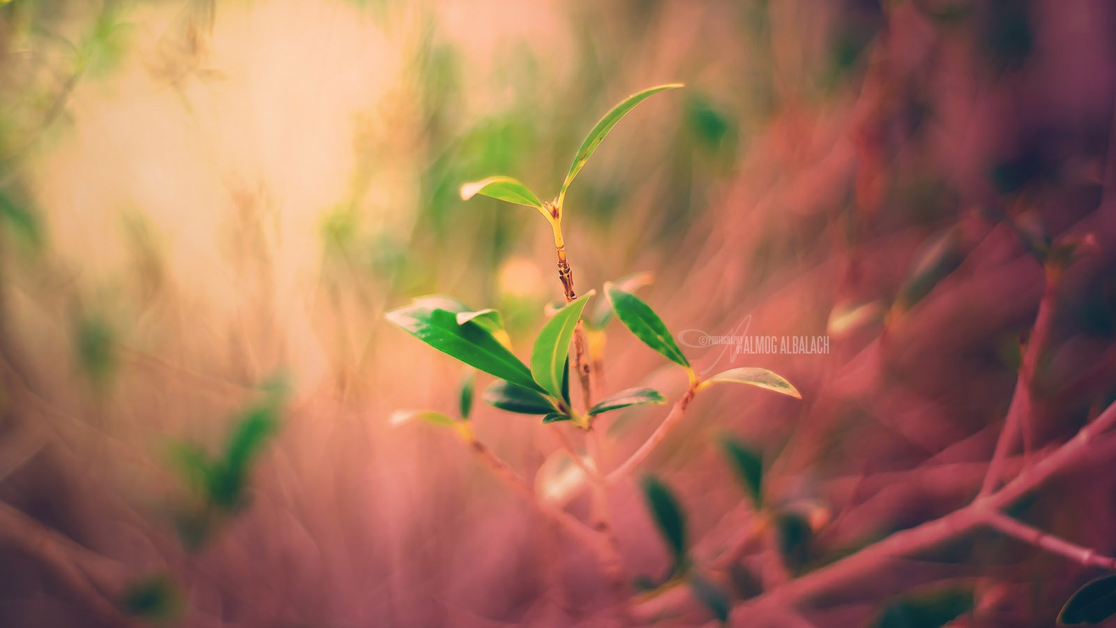 Free Download New Plant Life Wallpaper 1600x900 For Your