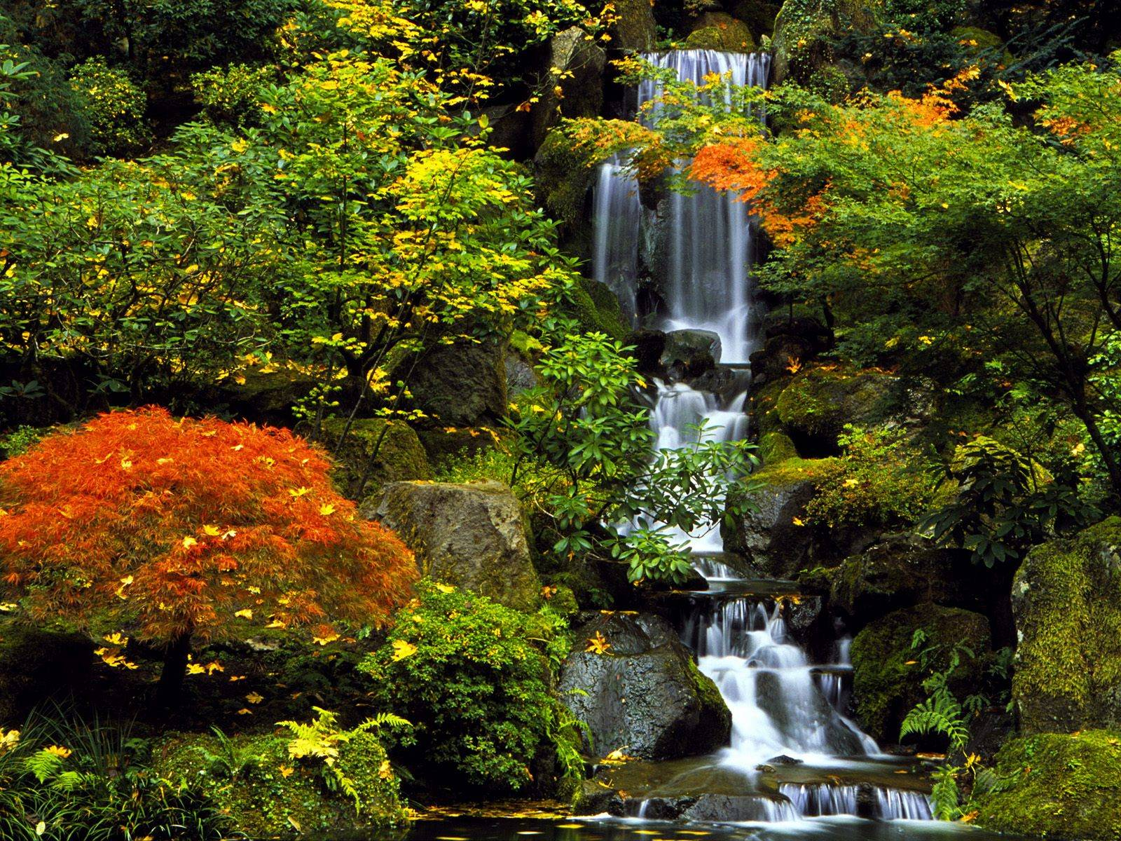 Portland images Japanese Garden HD wallpaper and background photos 1600x1200
