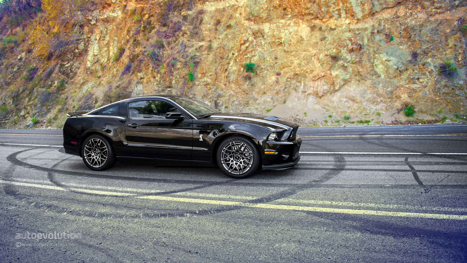 2014 Shelby Gt500 Wallpaper Wallpapersafari HD Wallpapers Download free images and photos [musssic.tk]