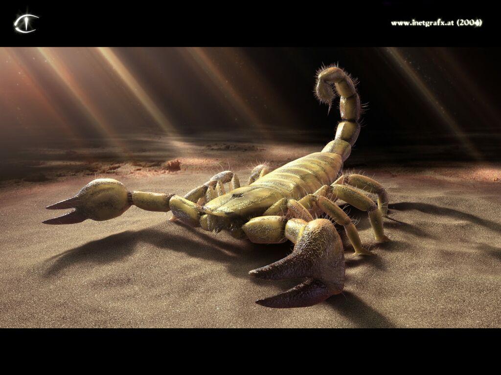 Scorpion 3d Graphics Desktop Wallpapers Download Pictures 1024x768