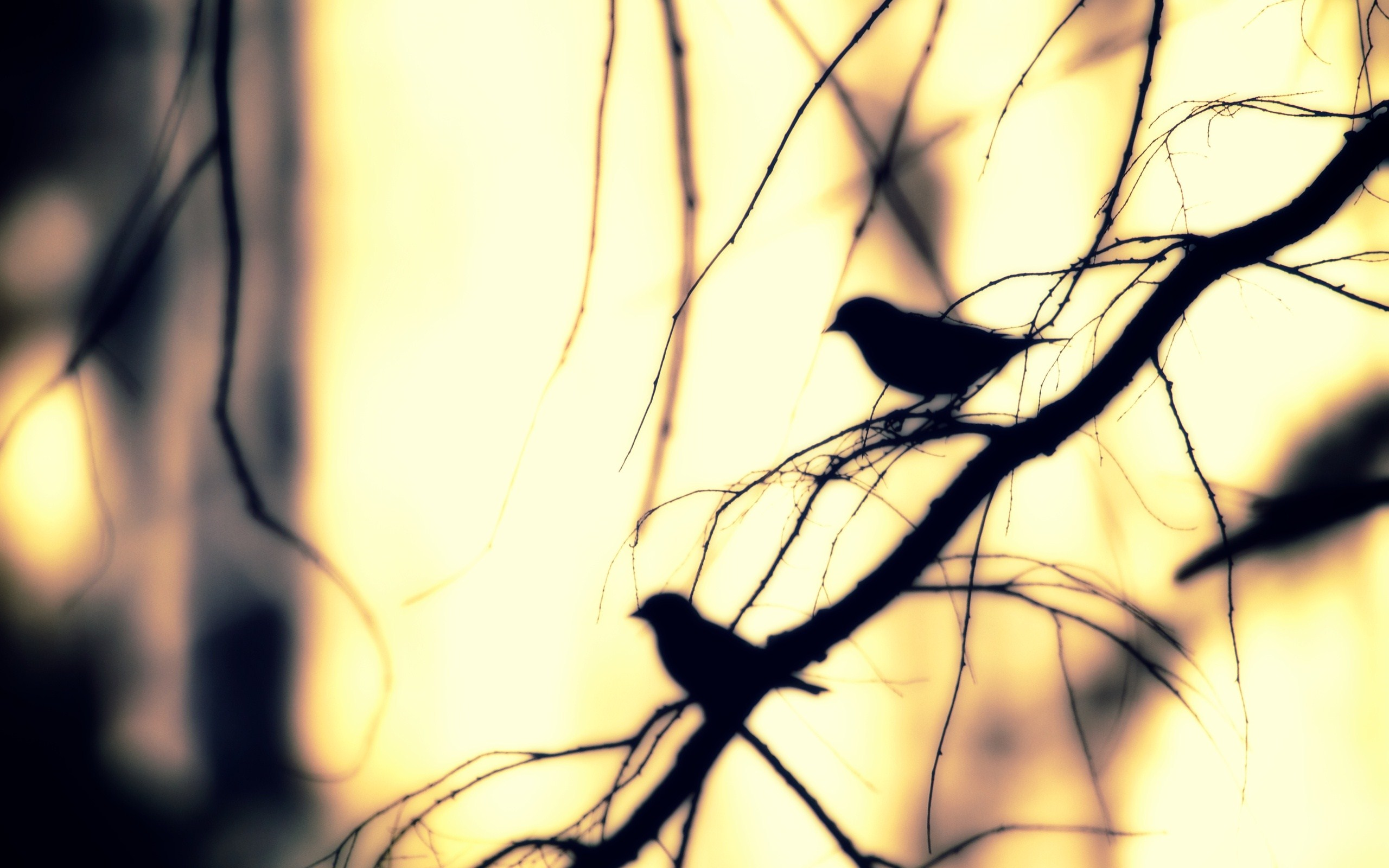 nature branch tree birds winter photo wallpaper 2560x1600 2560x1600