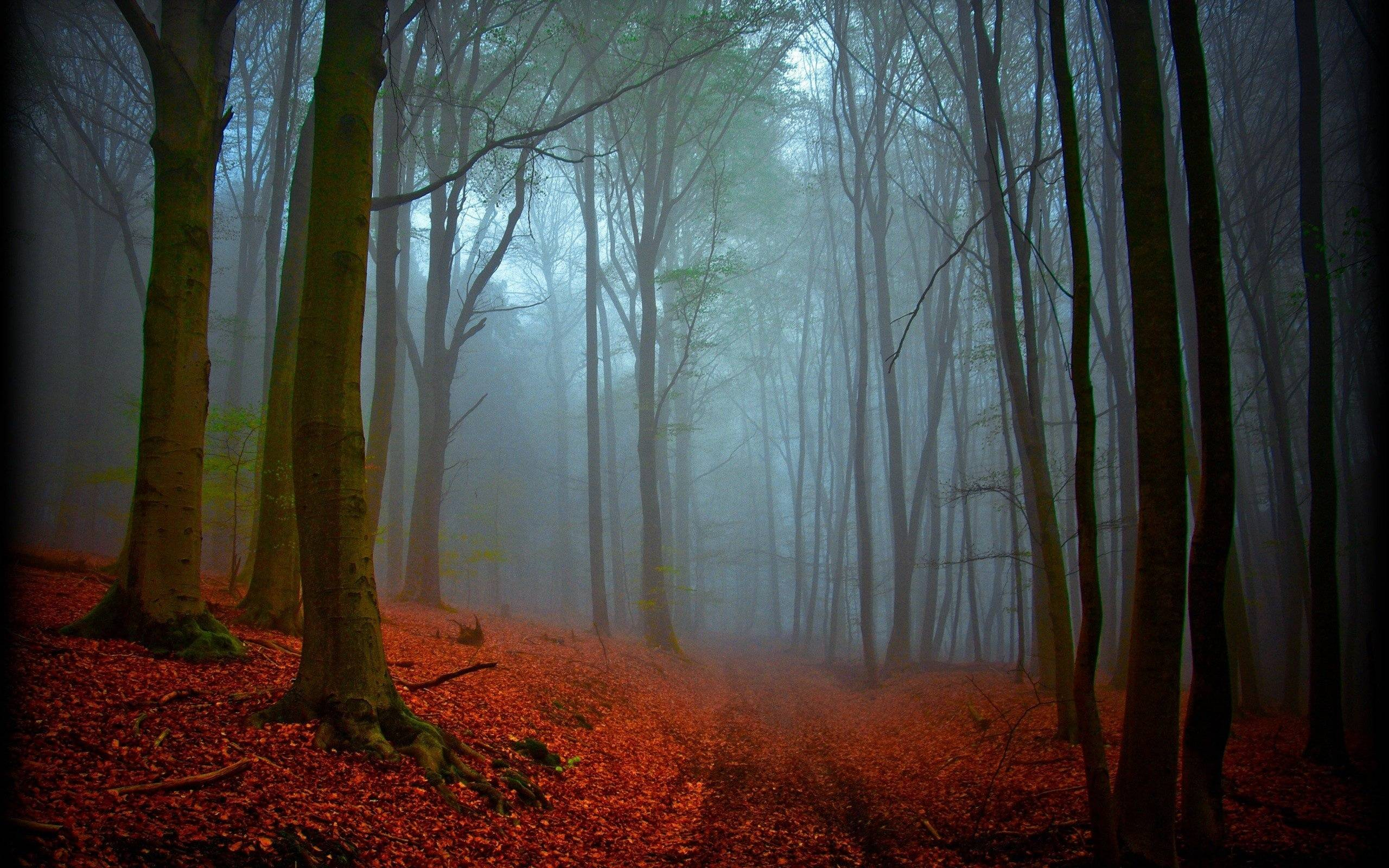 Black Forest Germany Wallpaper   Viewing Gallery 2560x1600