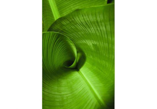 Window Films   Window decor Banana leaf 547x380