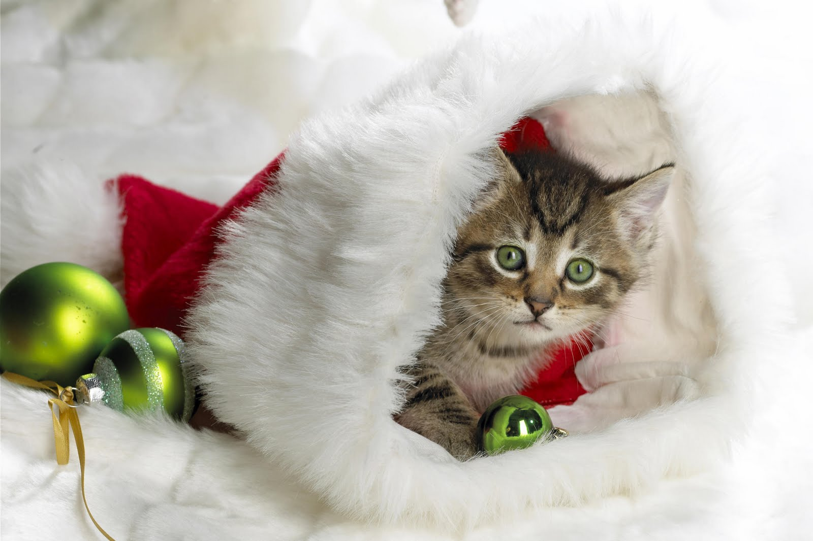 Cute Animal Christmas Wallpaper 7894 Hd Wallpapers in Celebrations 1600x1066