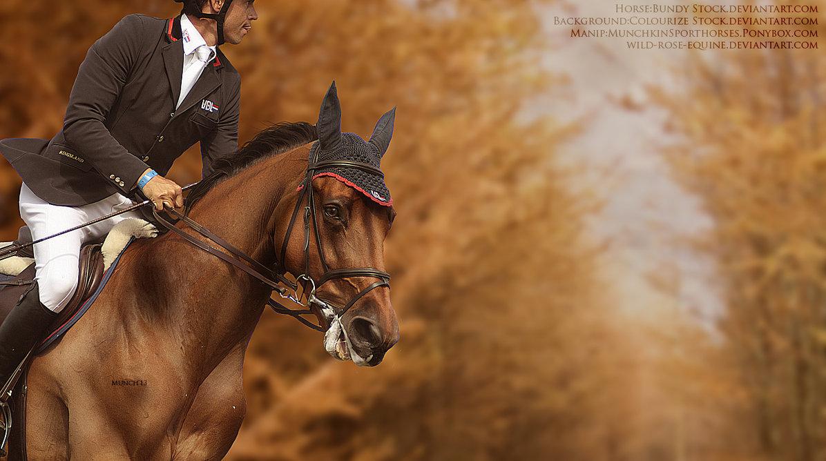 Autumn Horse Pictures Wallpaper Wallpapersafari