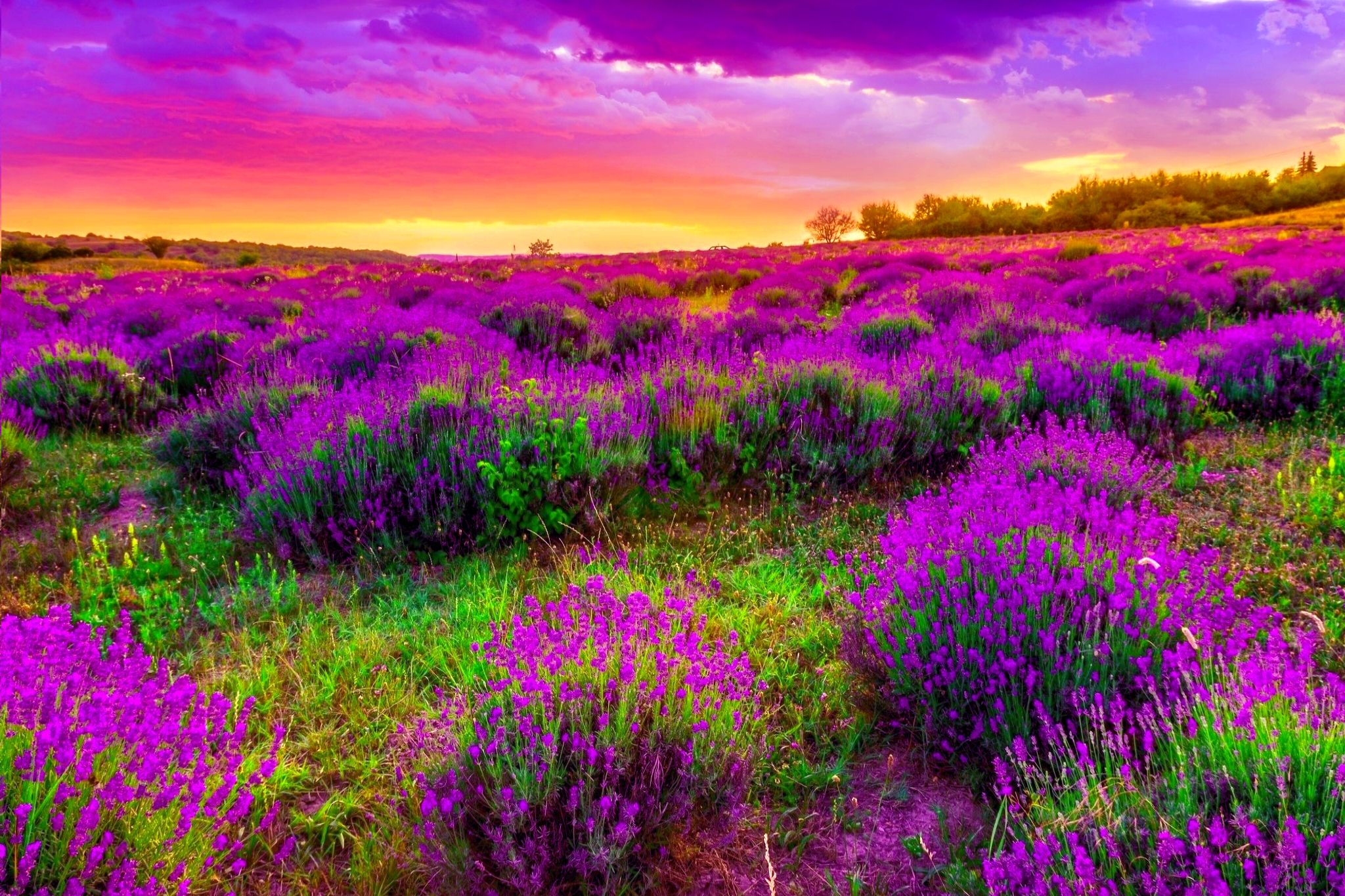 Beautiful Spring Background 19092 2048x1365 px 2048x1365