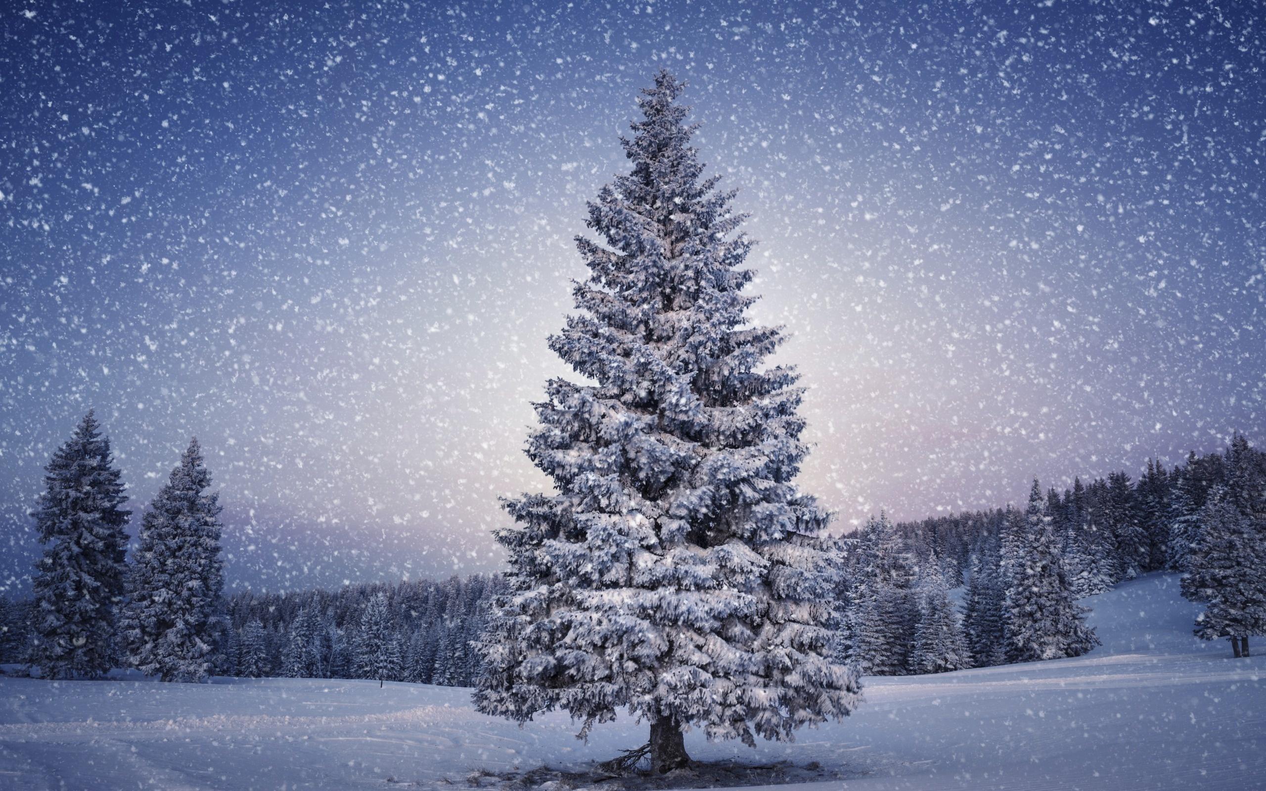 Snowy Christmas Tree HD Wallpaper 2560x1600