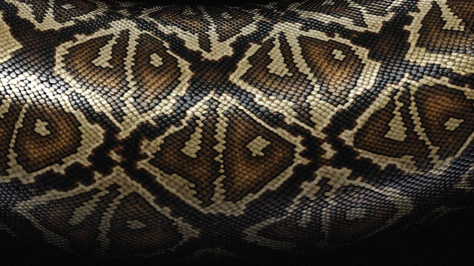 Snake Skin Background 7022053 1600x900