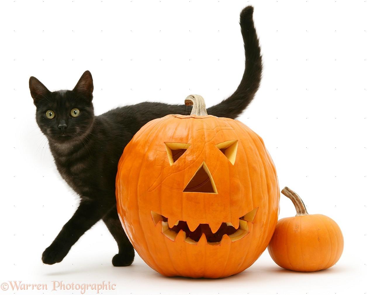 halloween costume boo monsters inc