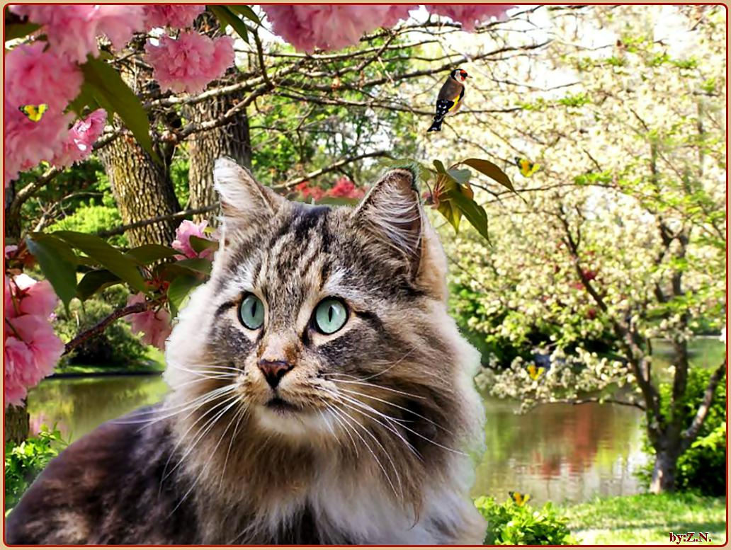 cat spring Search cat spring real estate property listings to find homes for sale in cat spring, tx browse houses for sale in cat spring today.