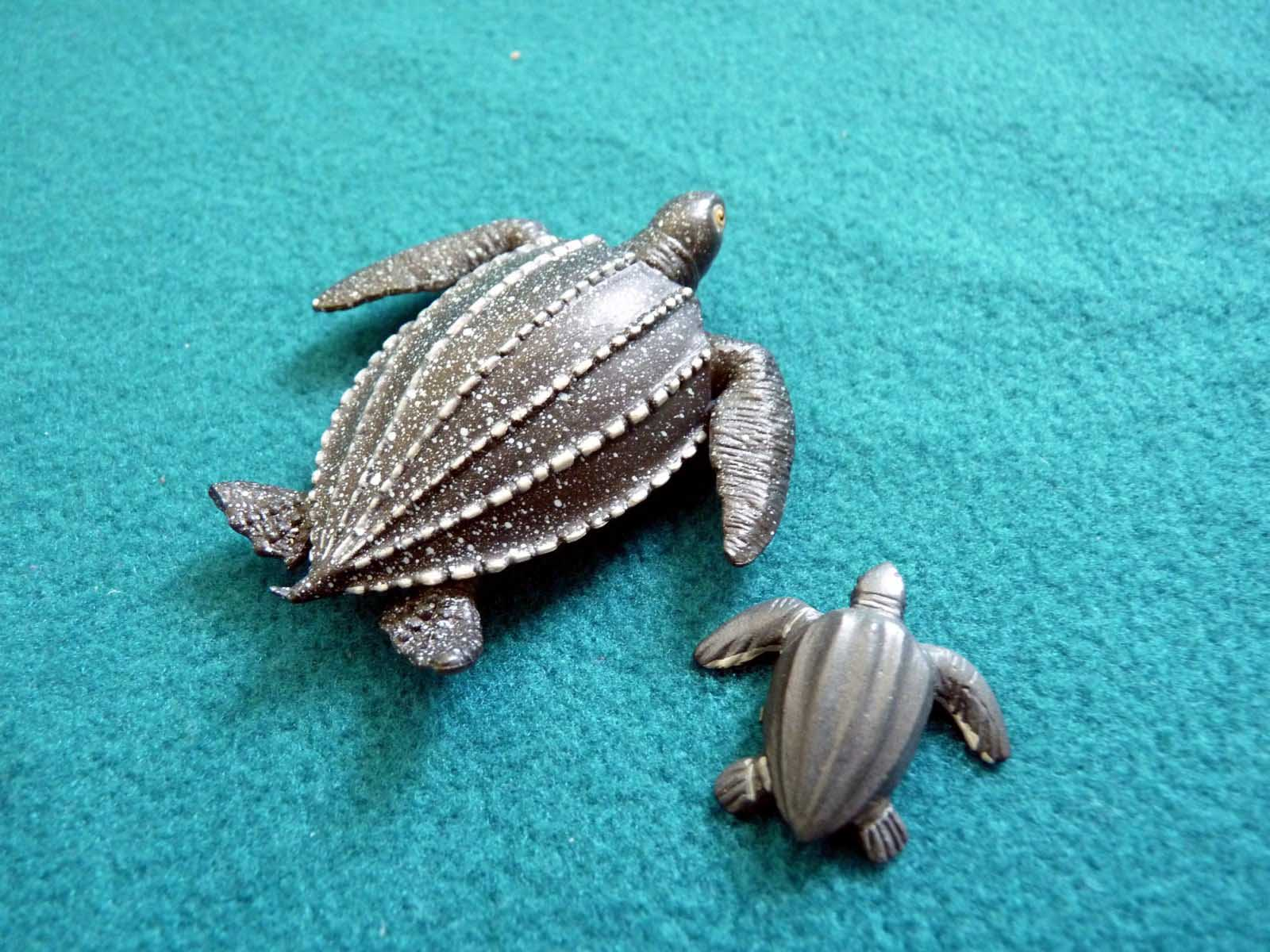 Cute Baby Turtle Wallpapers In HD 1600x1200