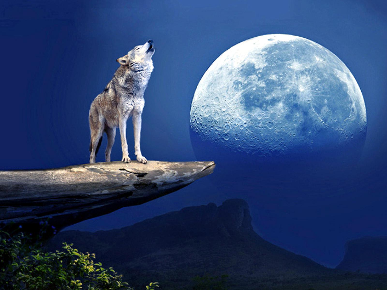 Wolf and moon wallpaper wallpapersafari - Wolf howling hd ...