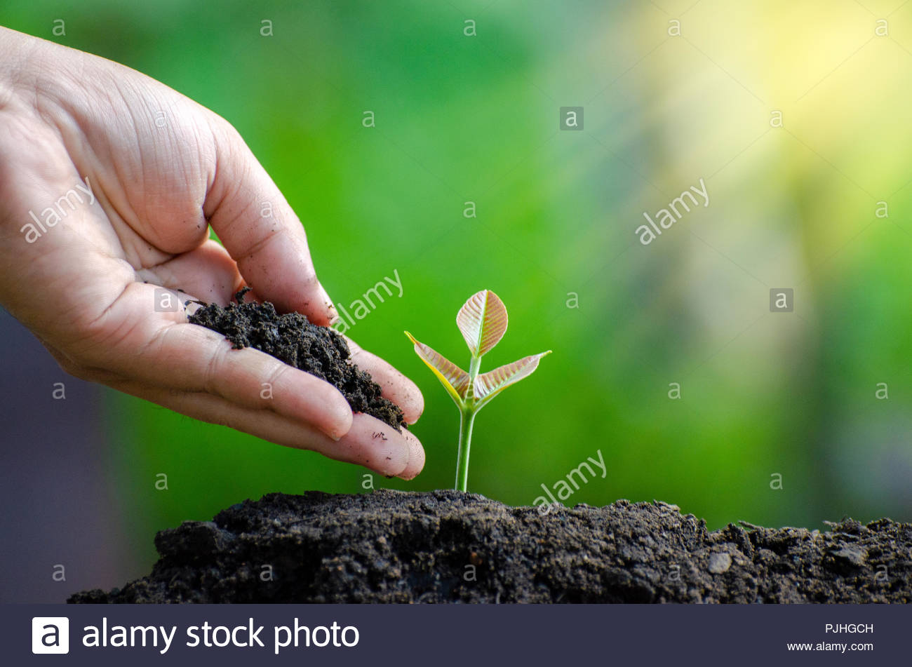 tree sapling hand planting sprout in soil with sunset close up 1300x951