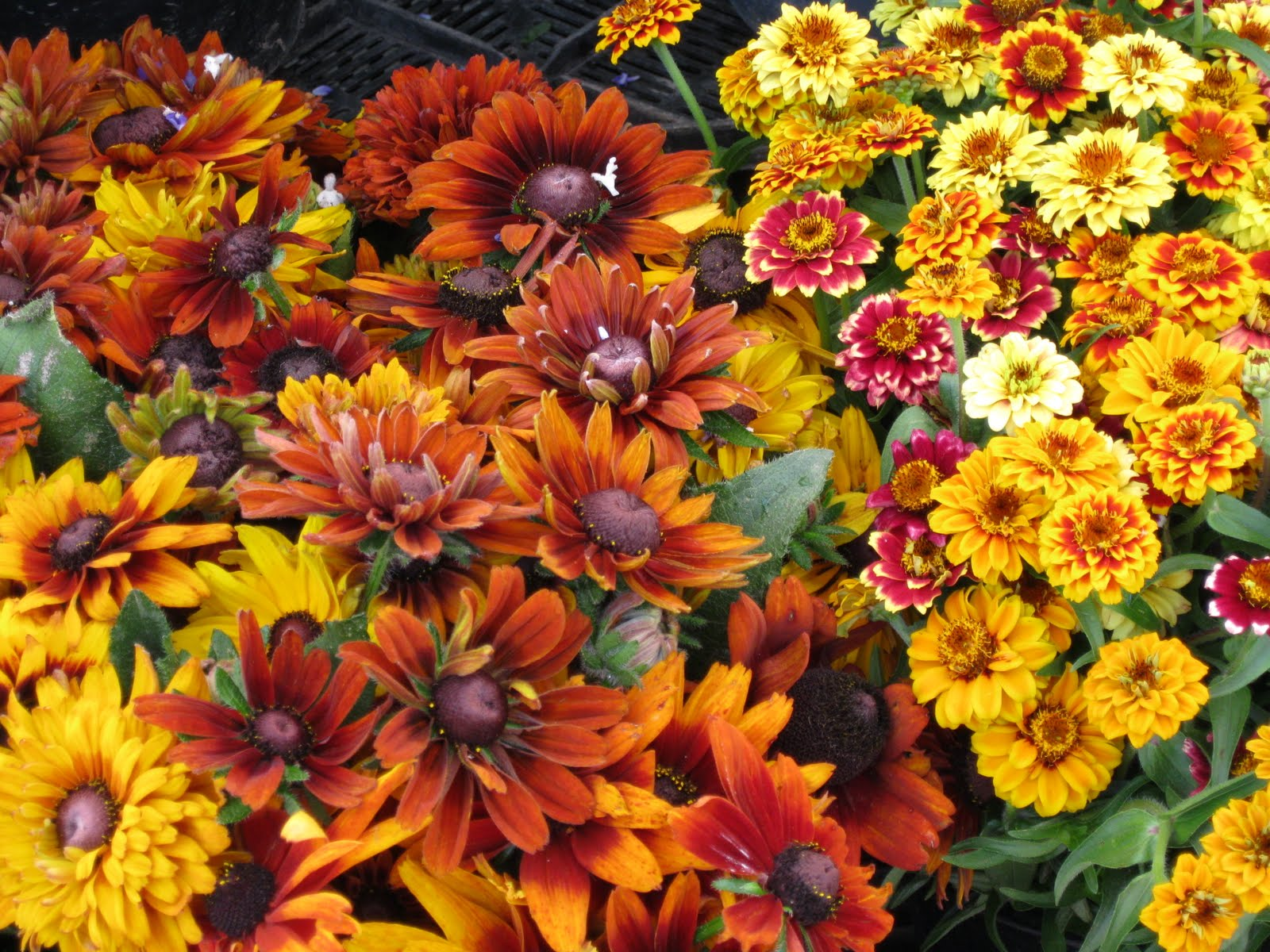 Fall Flowers And Pumpkins Wallpaper I love to eat pumpkin any and 1600x1200